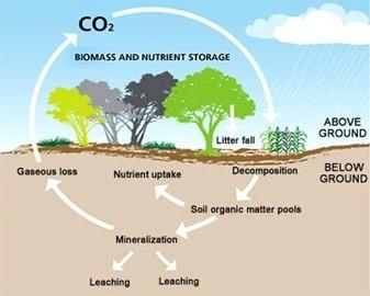 A graphic showing the cycle of CO2 above and below ground.